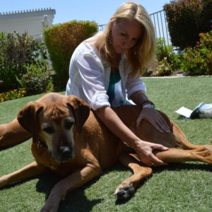 Energy Healing, Wellness Counseling, Animal Communication